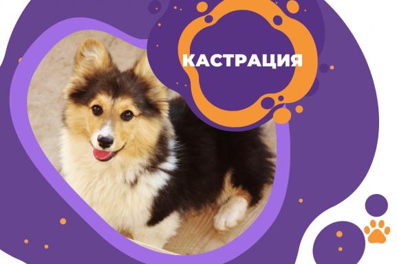 Кастрация на куче