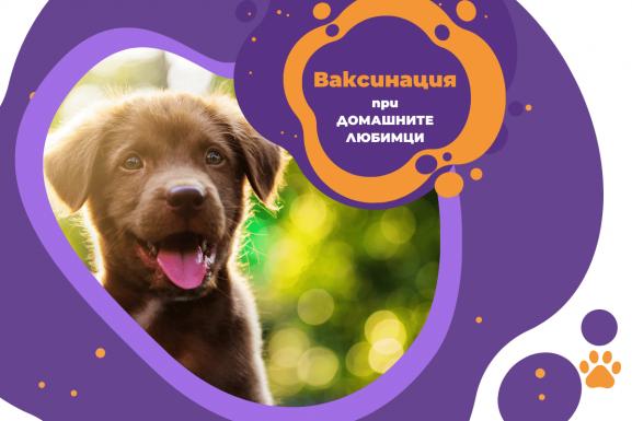 Ваксинация на куче